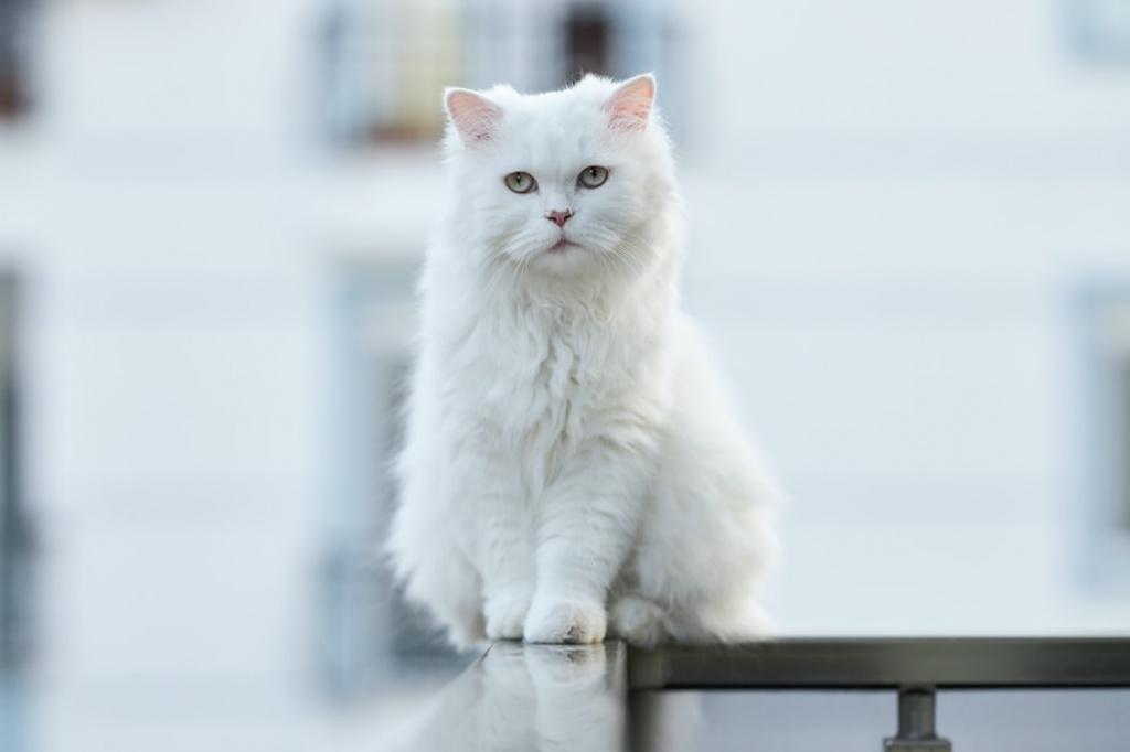 Уход за кошкой с сердечной недостаточностью