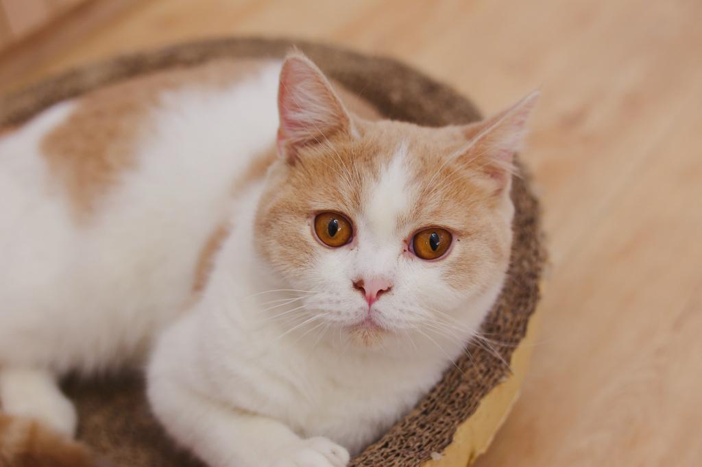 Можно ли поить и кормить кошку после стерилизации