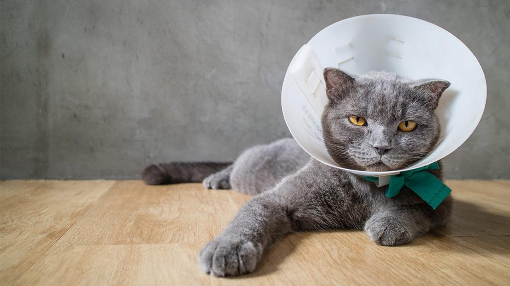 Осложнения при уколе коту внутримышечно