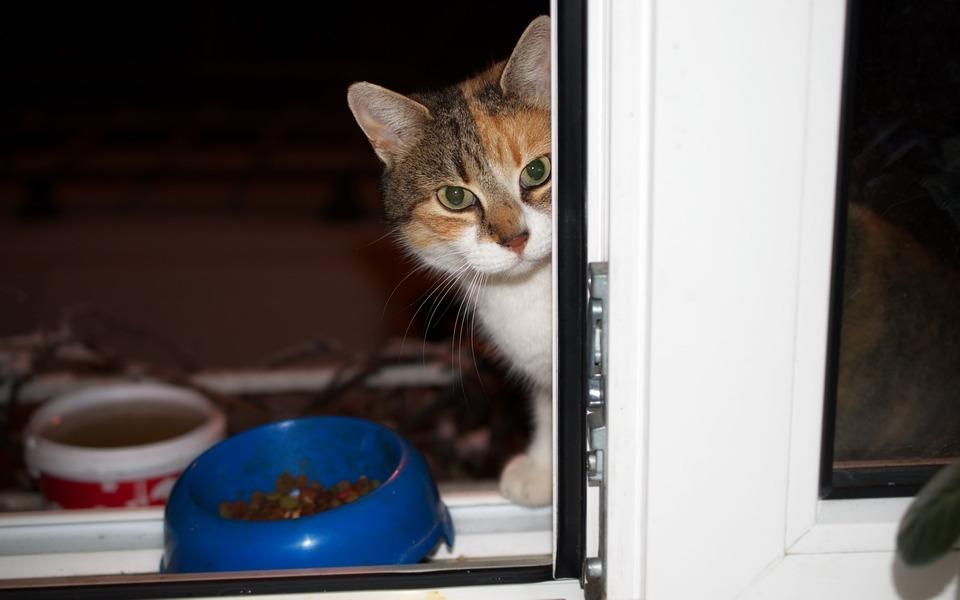 Кошка не ест сухой корм из-за жары