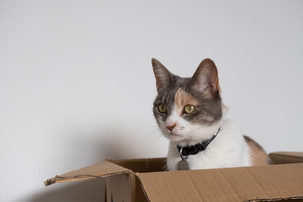 Подготовка к родам у кошек