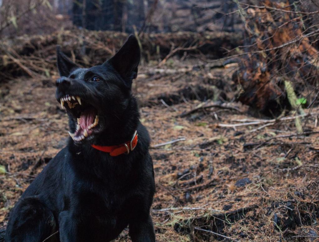 обратиться к специалисту, когда собака огрызается на хозяина