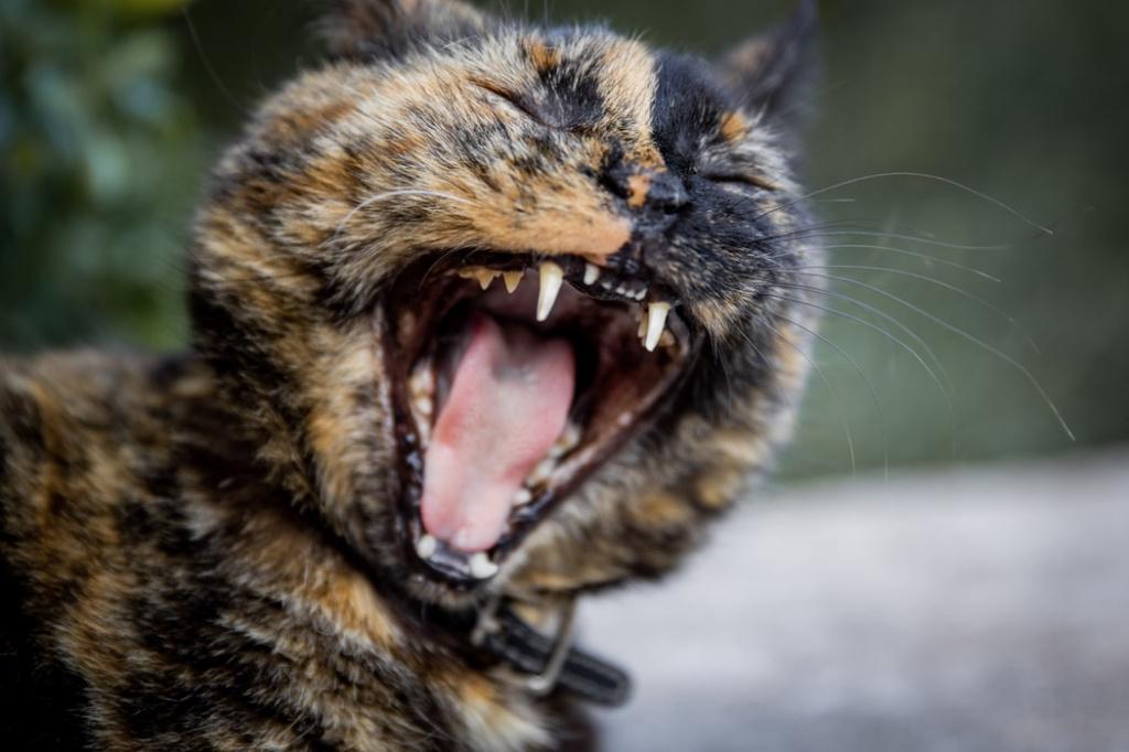 Как вылечить стоматит у кошки