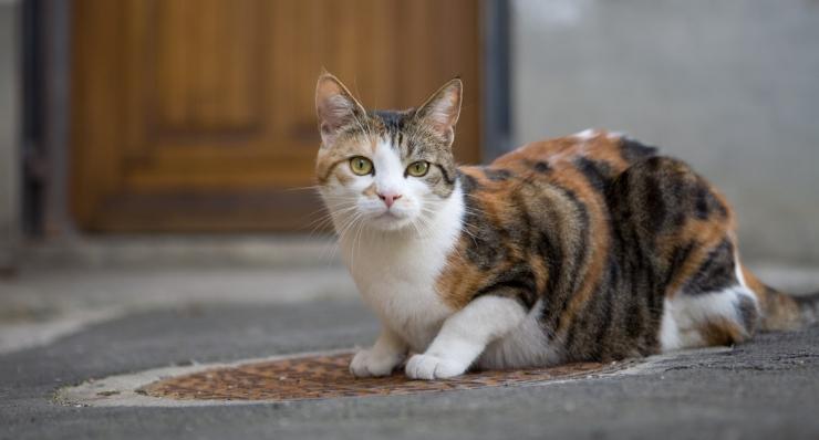 Причины появления у кошки блох