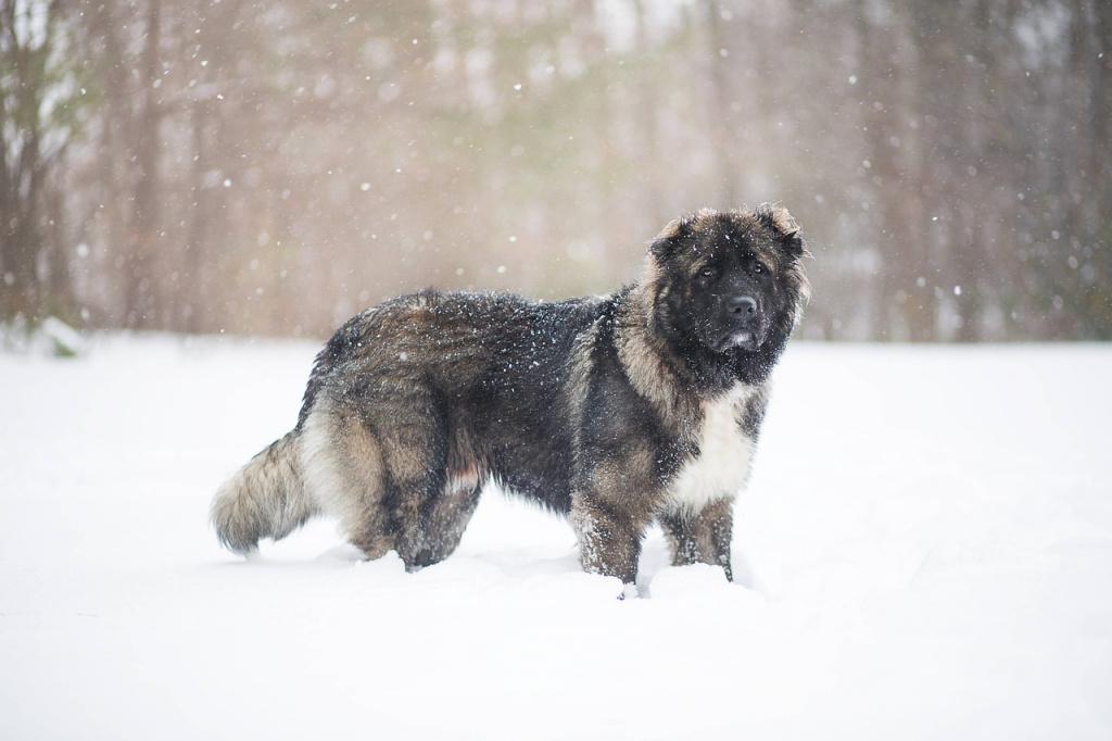 Топ лучших пород собак для охраны: кавказская овчарка