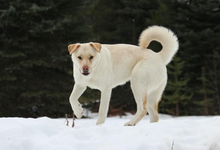 Доминантная агрессия у собак