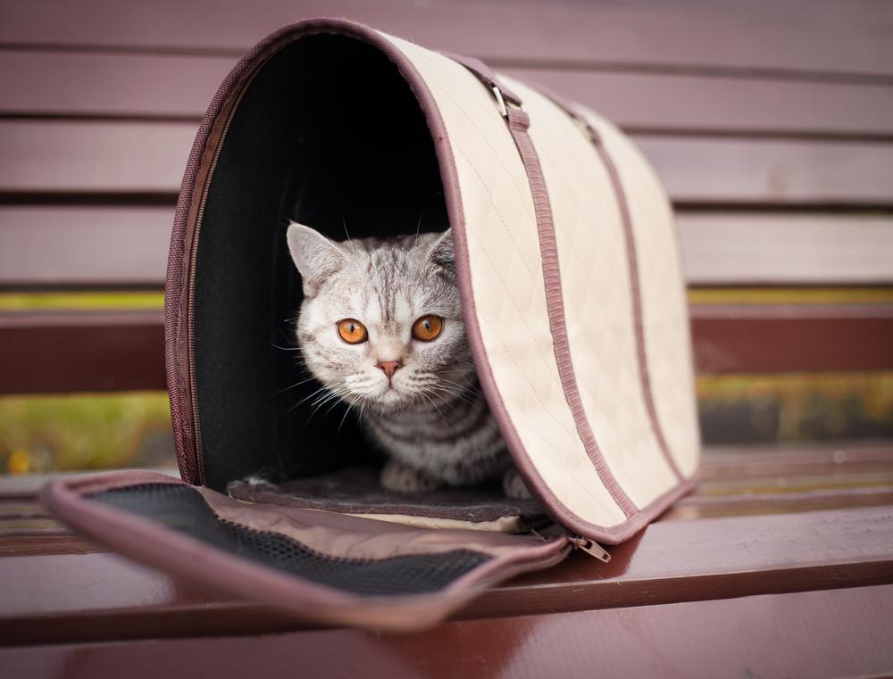 Какая переноска для кошек лучше: тканевая