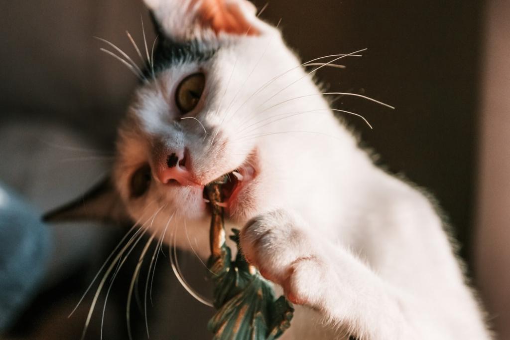 Причины появления стоматита у кота