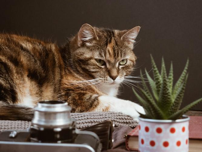 Кошка лазит в цветочные горшки по психологическим причинам