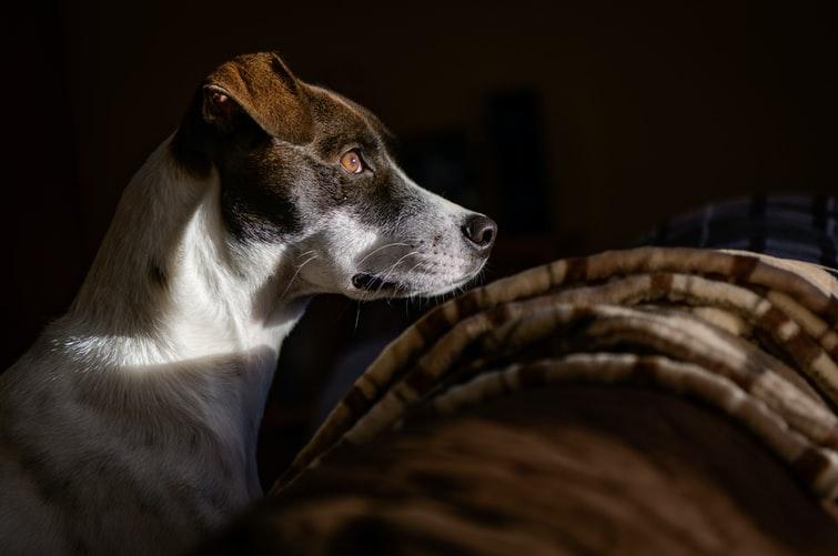 упрощенная методика расчета возраста собаки по человеческим меркам