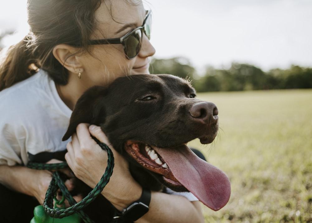 профилактические меры при икоте у собак