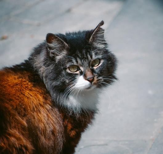 Почему кошки мурчат