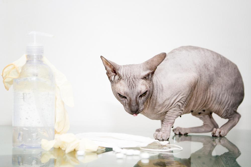 Лечение акне у кошек шампунями и народными средствами
