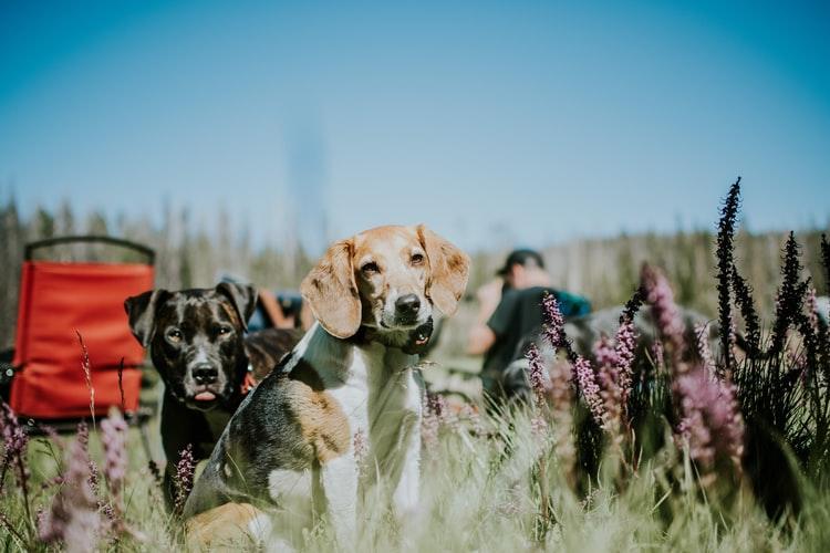 осложнения после прививки от бешенства у собаки