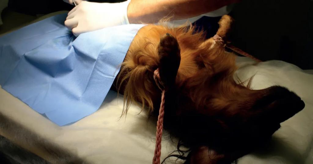 Собака Похудела После Стерилизации. Как похудеть собаке