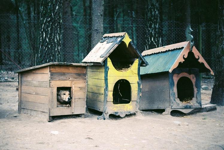 Трудности приучения собаки жить в будке