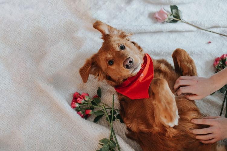 Основные сведения о течке у собак