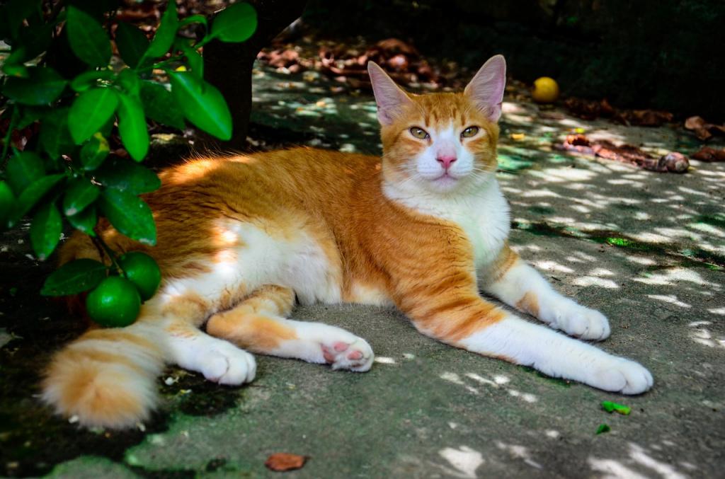 Дыхание кошки в норме