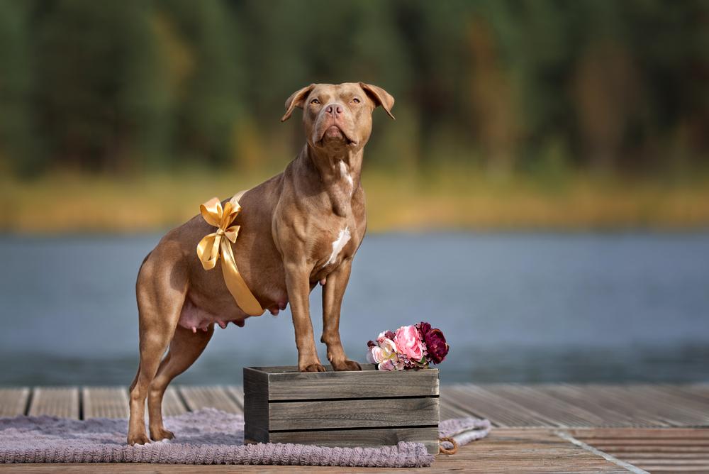 Сколько длится беременность у собак средних пород