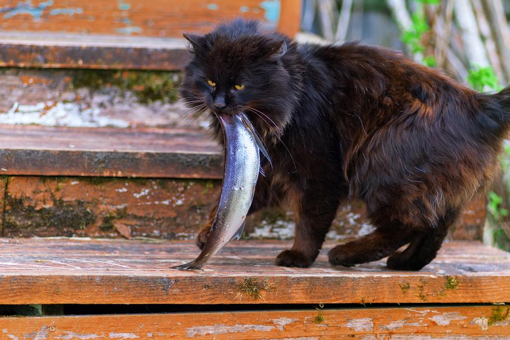 В каких случаях рыбные блюда противопоказаны для котов
