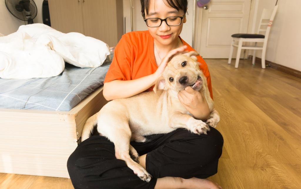 как отучить щенка прыгать на людей и хозяина