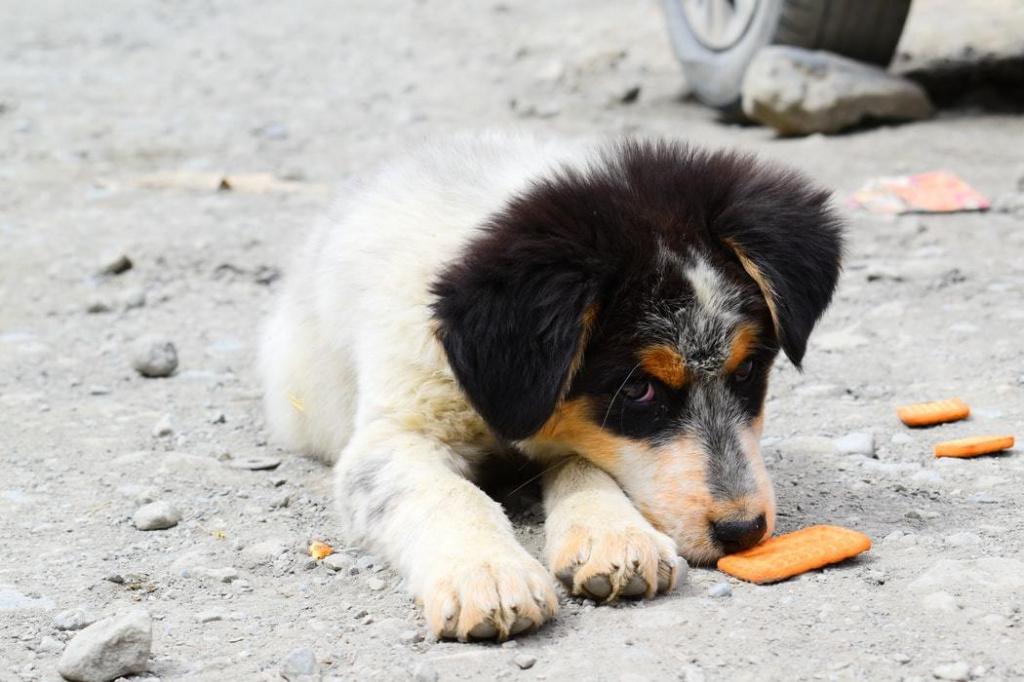 патологические причины рвоты непереваренной пищей у собаки