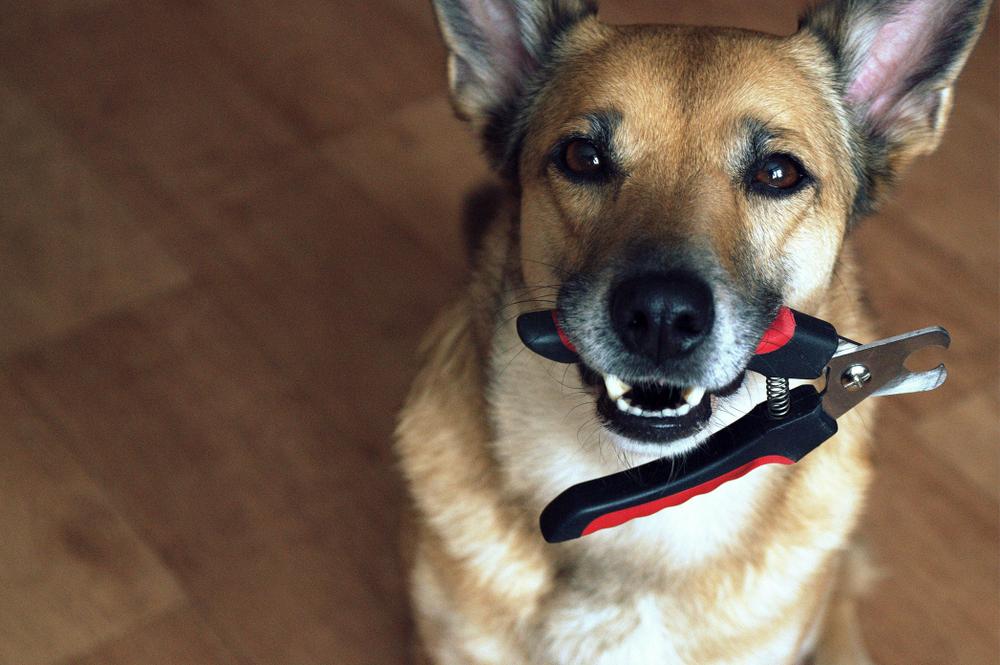 Инструменты чтобы подстричь когти собаке