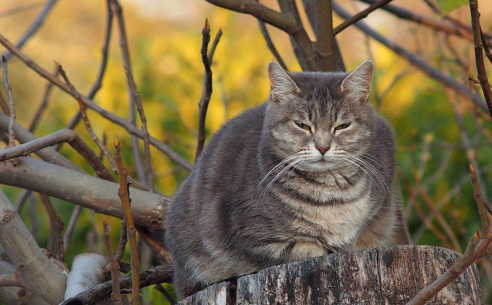 контроль веса и результат при откармливании кота