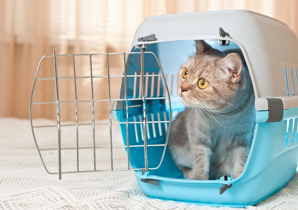 Параметры и виды переносок для кошек