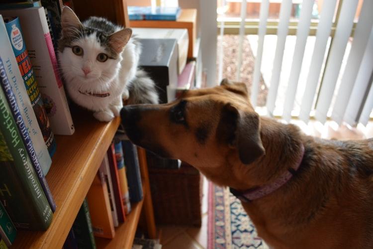 Когда не стоит рисковать, пытаться подружить собаку с кошкой