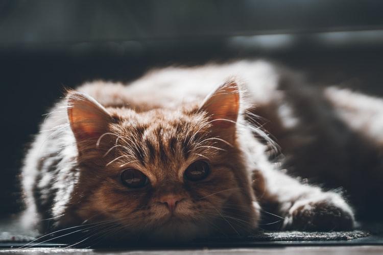 Что делать хозяину, если у кошки текут слюни