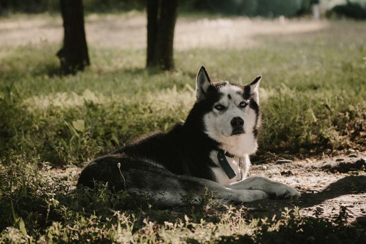 Физиологические причины дрожи задних лап у собак
