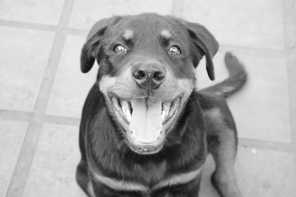 инфекции как причина икоты у собак