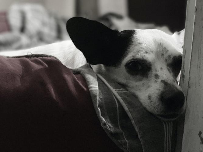 Первая помощь при крови в кале у собаки