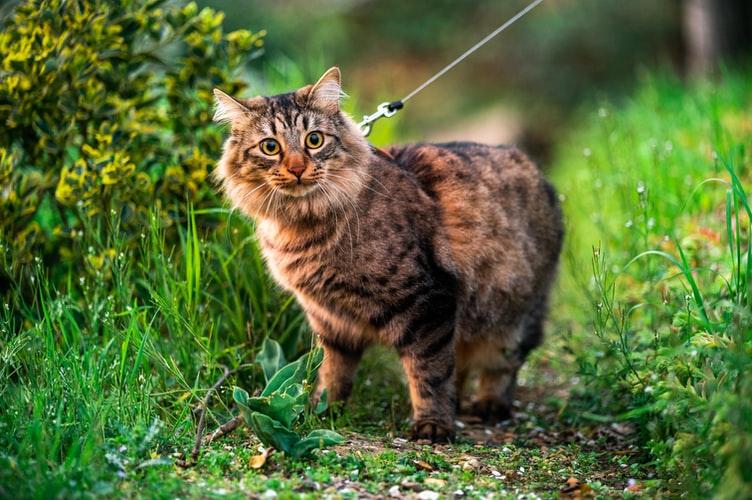 выращивание травы для кота без земли