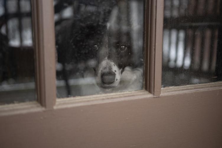 Как оставлять взрослую собаку одну дома