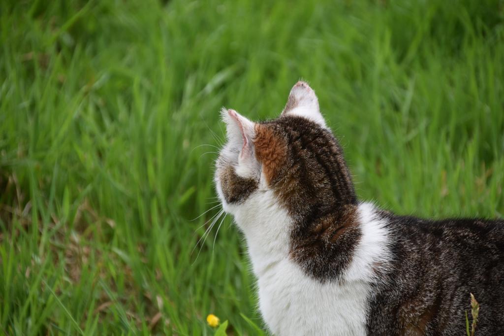 Обязательна ли чипировать кошку