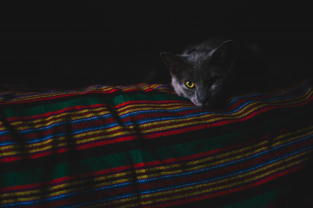 Насколько вреден наркоз для кошек