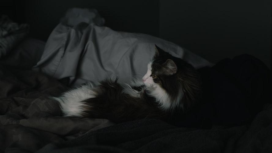 Физиологические причины заставляющие кошку ложиться в ногах
