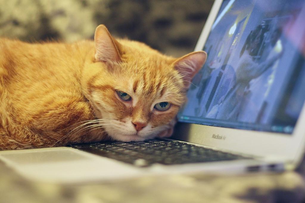 Обязательна ли процедура чипирования для кошек