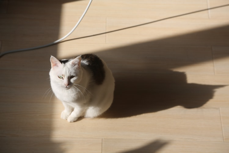 Почему котенок или кот грызет провода