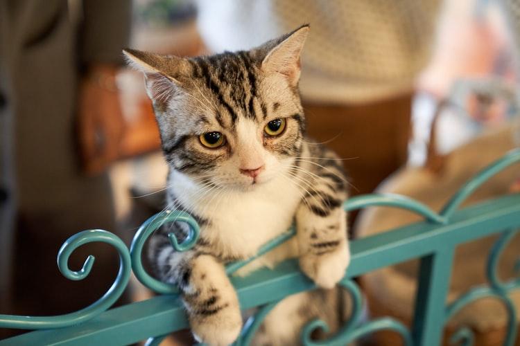 Профилактика акне у кошек