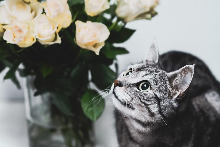 Почему кошка лазит и гадит в цветочные горшки
