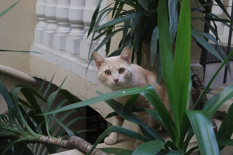 Почему кошка лазит в цветочные горшки