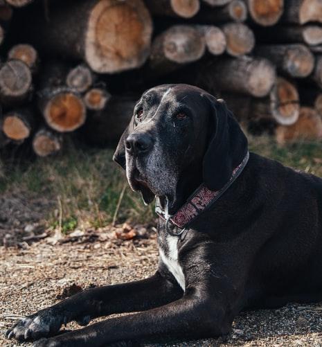 возраст собаки по человеческим меркам в таблице
