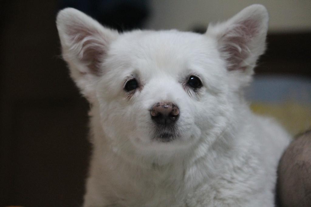 как спасти зрение при мутных глазах у собаки