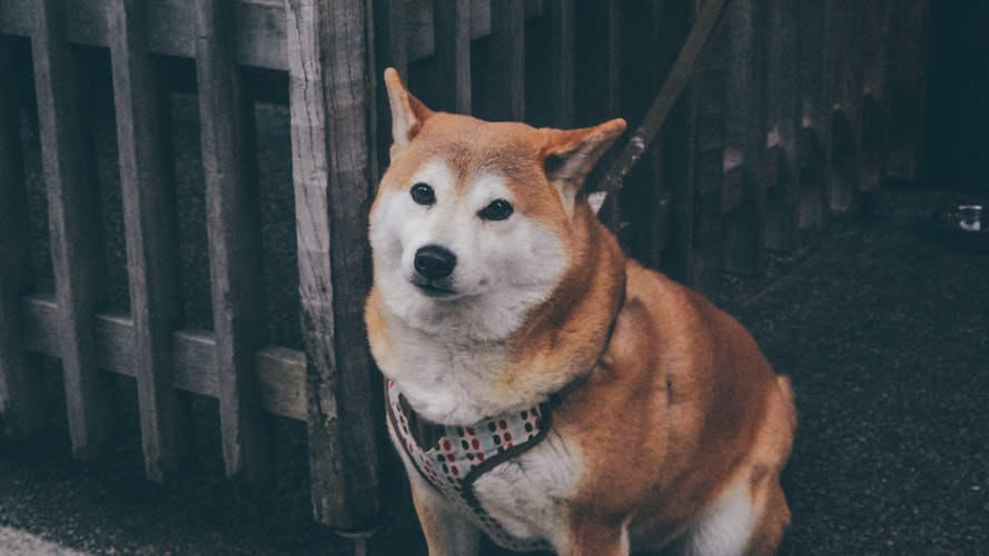 Бактериальные болезни собак