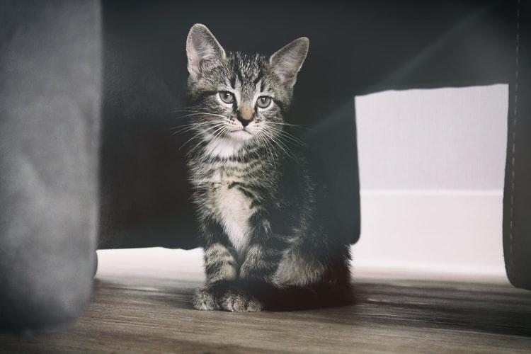 Зачем нужно знать возраст котенка