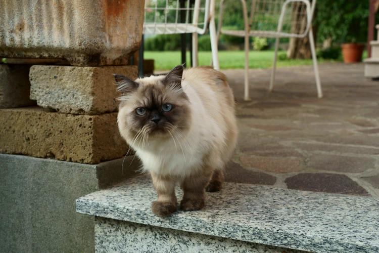 Как правильно выбрать фурминатор для кошек