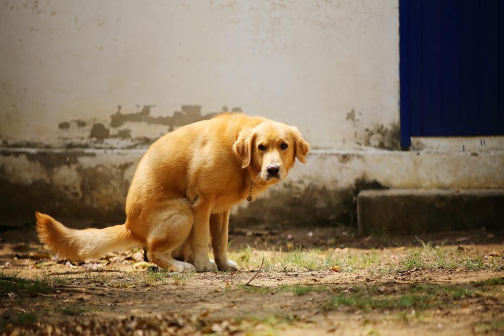 кровь в кале у собаки из-за инфекции